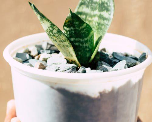 amazing benefits of aloe vera